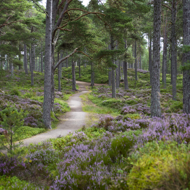 Cairngorms National Park bei Carrbridge